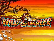 Wild Gambler – виртуальный автомат для азартного досуга